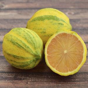саженцы лимона почтой