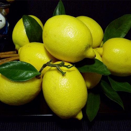 лимон купить
